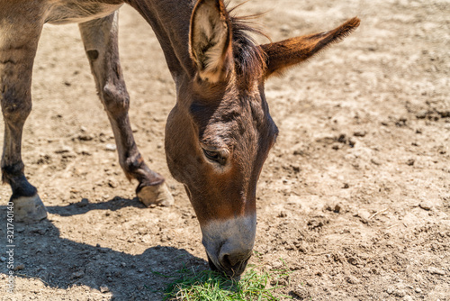 Photographie A donkey grazes