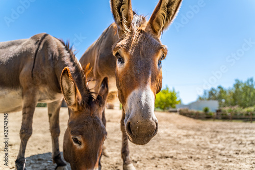Two donkeys have in the summer sky Wallpaper Mural