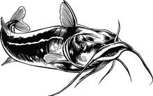 Catfish Swimming Vector Illust...