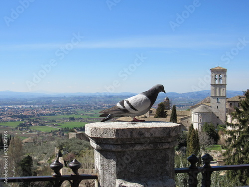 A pigeon at Piazza Santa Chiara in Assisi, Italy with the church of Santa Maria Maggiore and the landscape in the background with blue sky