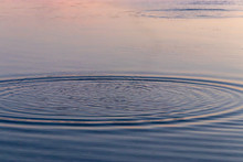 Ripples Of Water Caused By Tos...