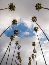 Tall Palm Tree Road