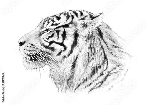 recznie-rysowane-ilustracja-glowa-tygrysa
