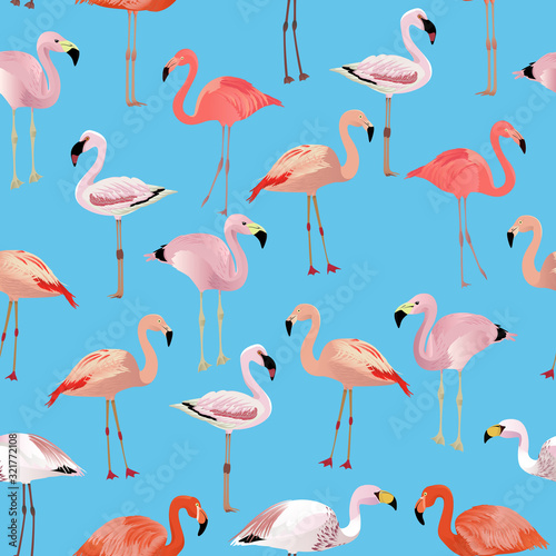 Photo Flamingo species cartoon set. Vector birds collection