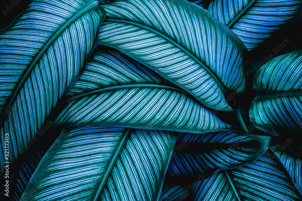 Fototapeta closeup tropical green leaves nature in the garden and dark tone background concept