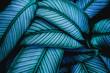 Leinwandbild Motiv closeup tropical green leaves nature in the garden and dark tone background concept