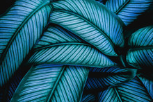 Closeup Tropical Green Leaves Nature In The Garden And Dark Tone Background Concept