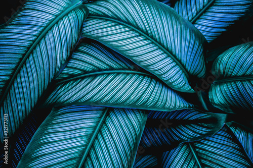 Fototapeta closeup tropical green leaves nature in the garden and dark tone background concept obraz