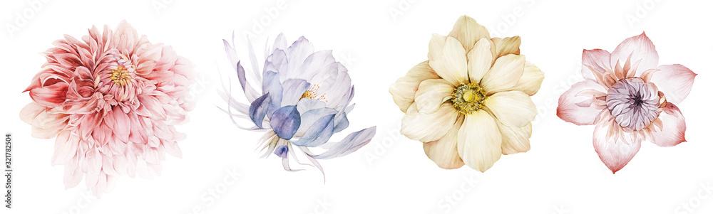 Fototapeta Flowers watercolor illustration.Manual composition.Big Set watercolor elements.