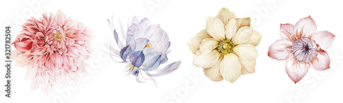Fototapeta Flowers watercolor illustration.Manual composition.Big Set watercolor elements. obraz