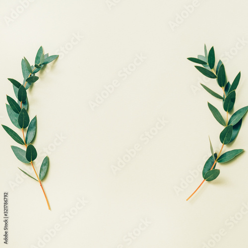 Fototapeta Floral background. Natural composition. Two green olive sprigs frame on sage toned backdrop. obraz