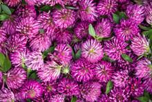Full Frame Of Harvested Flower...