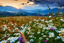 Wildflowers, Meadow And Beauti...
