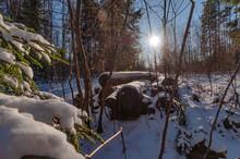 Clear Frosty Winter Day, Logs ...