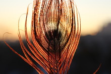 Divine View Of A Feather In Th...
