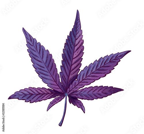 Vászonkép Realistic vector illustration of cannabis leaf