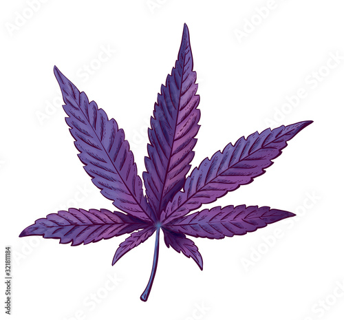 Valokuva Realistic vector illustration of cannabis leaf