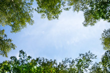 Blue Sky Framed By Green Foliage. Frame With Copy Space.