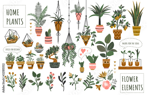 Canvas Print Houseplants flowerpots isolated icons vector illustration