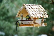 Birds Eat From The Feeder. Bir...