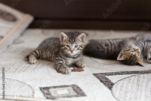 portrait of playful bengal one month old baby cat kitten lying on a fluffy brown Wallpaper Mural