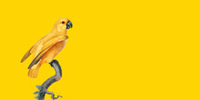 Isolated On Yellow Background,...