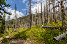 The Rockies. Regrowing Forest ...