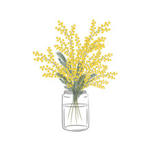 Mimosa Branch In A Glass Jar. Yellow Mimosa Flowers With Leaves. Spring Flowers. Floral Composition. Vector Illustration On A White Background