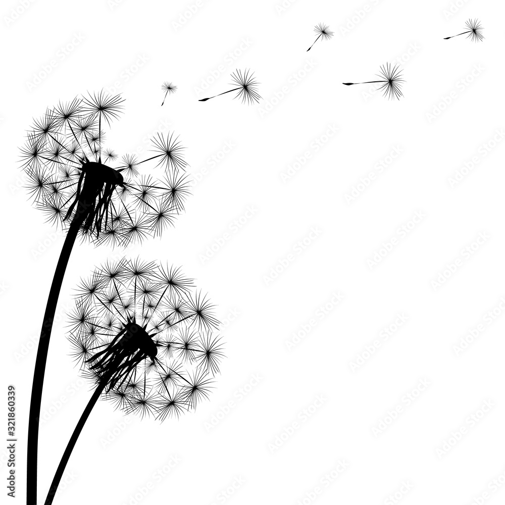 Fototapeta Black silhouette of a dandelion on a white background