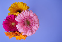 Bouquet Of Gerbera Jamesonii F...