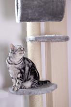 Katze Auf Einem Kratzbaum