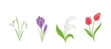 Spring Flower Set. Flower Design Element. Hand Drawn Crocus, Snowdrop, Tulip And Lily Of The Valley