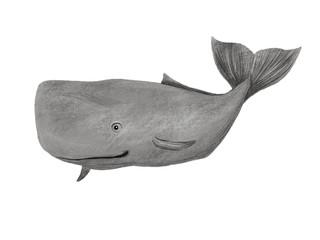 Beluga whale. Cute illustration on white isolated background