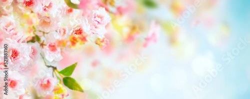 Beautiful pink and white cherry flowers on  blurred light background. Spring floral background with copy space. - 321883160