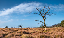 Dry Nature With Dead Lonely Tree