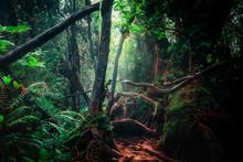 Fantasy Mystical Tropical Moss...
