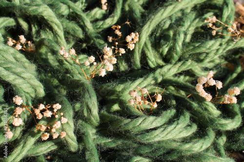 micro panorama di prato verde di lana con fiori bianchi Fototapet