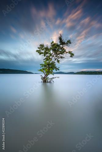 drzewo-nad-jeziorem-przeciw-niebu