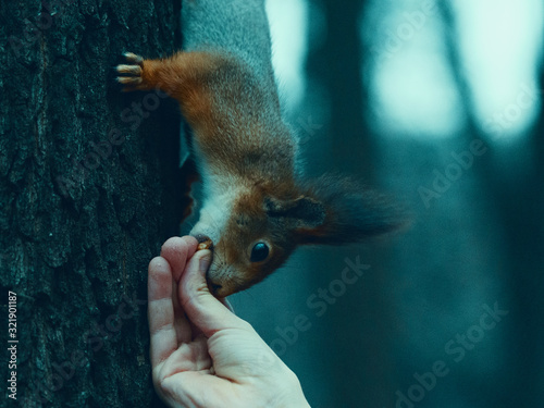 Portrait of a little funny squirrel in the park in autumn day Wallpaper Mural
