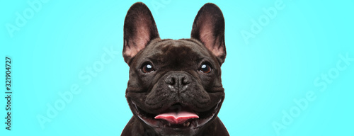 Photo closeup of an adorable french bulldog puppy dog looking very happy and eager