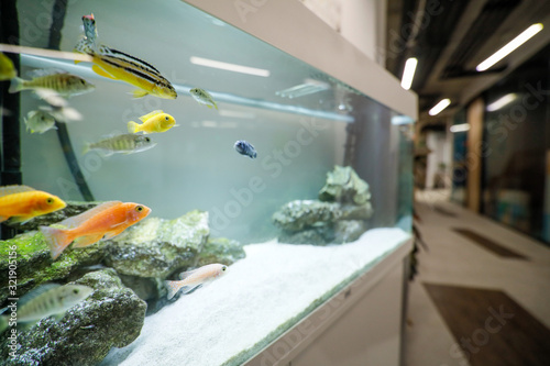 Photo Shallow depth of field (selective focus) image with an aquarium with colorful small fish inside an office building