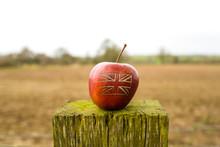 An Apple In The Garden