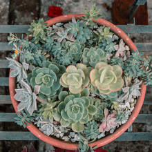 A Set Of Succulent Plants Making An Aesthetic Composition
