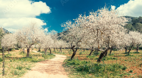 Foto blossoming almond tree