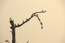 Silhouette Of A Tree With Birds