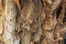Tree Bark Texture Close Up. Pa...