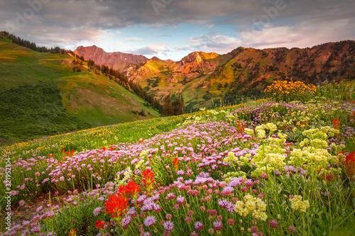 Photo Abion Basin wildflowers at Alta, Utah, USA.