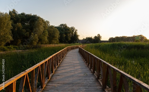 Fotografie, Obraz Beautiful shot of a boardwalk in the park surrounded by tall grasses and trees d