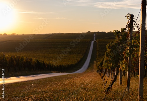 Fototapeta Beautiful view of a vineyard and golden fields during sunrise obraz