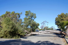 Large Tree Branch Broken, Spli...